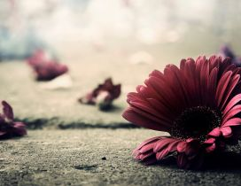 Artistic wallpaper - Flowers on the ground
