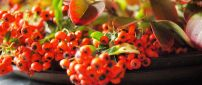 Autumn flowers and fruits - Orange wallpaper