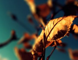 Rusty Autumn leaf in the sunlight - Blurry background