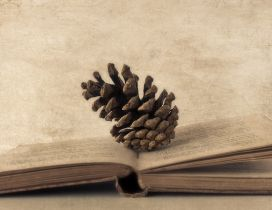 Pinecone on an old book - HD wallpaper