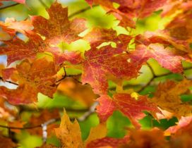 Rusty Autumn leaves - Wonderful season nature