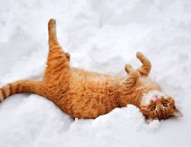 Rusty cat play in the white and cold snow - HD wallpaper