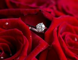 Silver ring for marriage and beautiful red roses