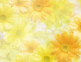 Wonderful yellow flowers on the screen - HD wallpaper