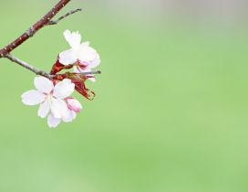 Branch of tree blossom - Spring season time