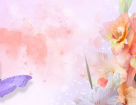 Purple butterfly and pink flowers - Beautiful spring season