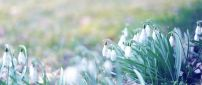 Lots of snowdrops in the garden - Spring season time