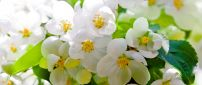 Flowers blossom - Wonderful spring season