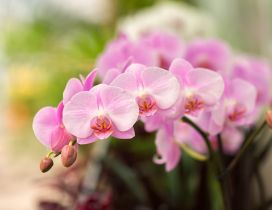 Little pink orchid flowers - Wonderful plant