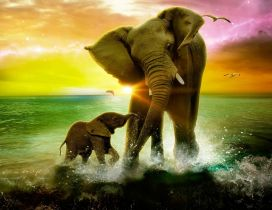 Beautiful love between mother and son elephant