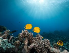 Yellow fishes in the ocean - Beautiful world under water
