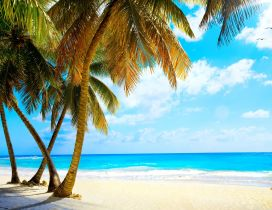 White beach sand and big palms - Wonderful azur ocean