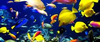 Magic colors under water - Happy fishes HD wallpaper