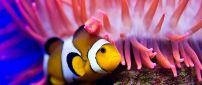 Macro fish wallpaper near pink coral plant - Beautiful fish