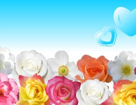 DIfferent colors of beautiful roses - Blue heart in the sky