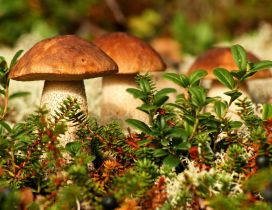 Delicious mushrooms on a wonderful Autumn season