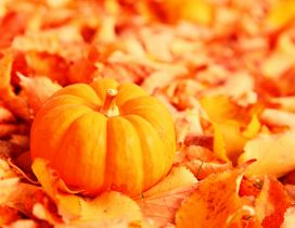 Wonderful orange pumpkin on an Autumn leaves carpet