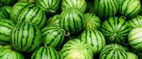 Green wallpaper - lots of watermelons - delicious fruit