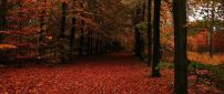 Welcome beautiful Autumn season - Rusty carpet of leaves
