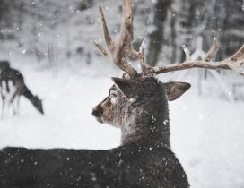 Wonderful winter season for a deer family - Wild animal