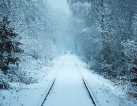 Wild animal deers on a railroad - White Winter seaon