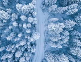 White road trhough the forest - Winter season