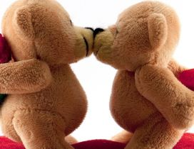 Two sweet lover bears are kissing - Happy Valentine's Day