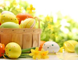 Spring yellow flowers and colorful Easter eggs-Happy Holiday