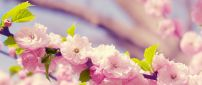Spring blossom trees - Wonderful cherry flowers