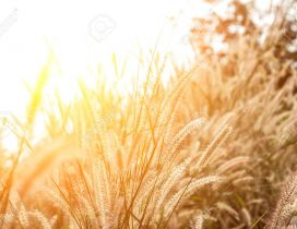 Autumn sunlight over the wheat field - HD wallpaper
