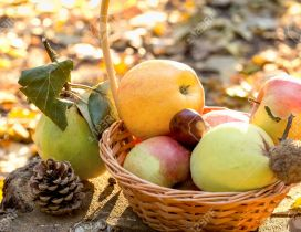 Autumn fruits - Basket full with delicious apples