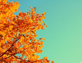 Beautiful Autumn tree and a blue yellow sky - HD wallpaper