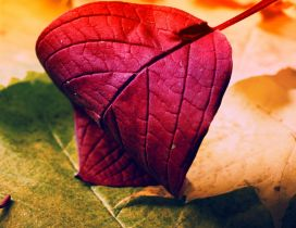 Wonderful macro Autumn leaf - Intense red color