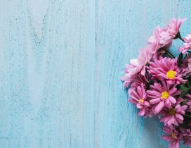 Pink flowers bouquet on a blue background - HD wallpaper