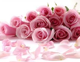 Light pink flowers - Rose bouquet - Special woman 8 March