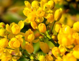 Wonderful yellow flowers - Enjoy spring perfume