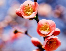 Macro spring flower - Pink color HD wallpaper